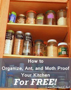 Ants In Pantry Get Rid Of by 1000 Ideas About Pantry Moths On Moth