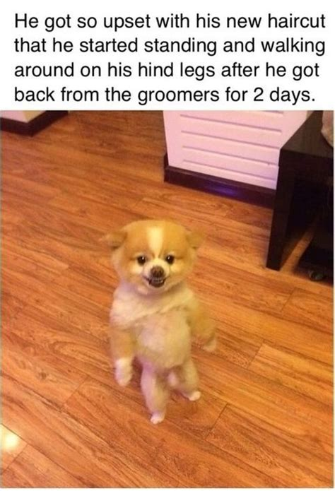 Bad haircut   Funny Pictures and Quotes