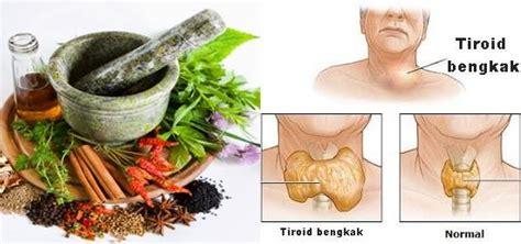 resep tanaman obat tradisional tiroid rumahan