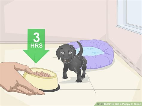 how until a puppy can sleep through the 3 ways to get a puppy to sleep wikihow