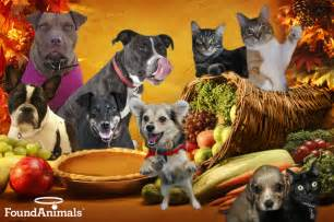 dogs thanksgiving gallery for gt cat and dog thanksgiving