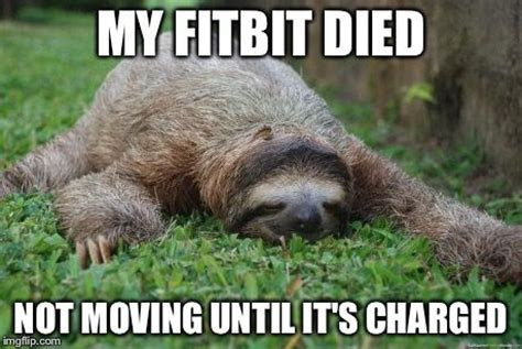 Fitness Sloth Meme - my fitbit died not moving until it s charged humor