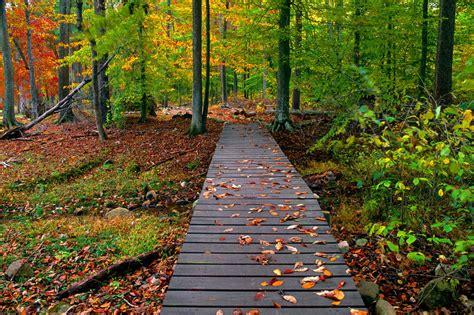 Nice's Wallpaper's: Beautiful Autumn Season Wallpapers HD Fall Nature Wallpaper