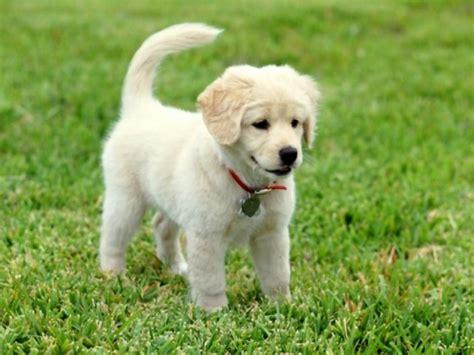imagenes animales bebes imagenes de perritos bebes de todas las razas