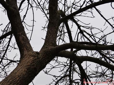 Imagenes De Arboles Invierno | arbol de invierno