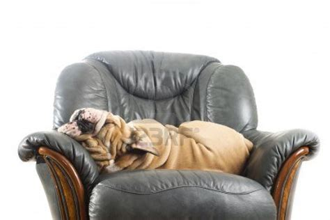 how to keep a dog off a couch keeping your dog off the furniture thedogtrainingsecret com