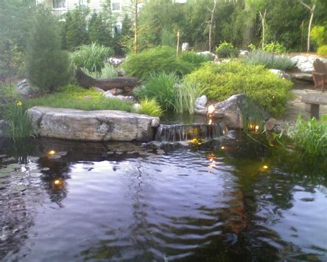 backyard pond ones st louis chapter