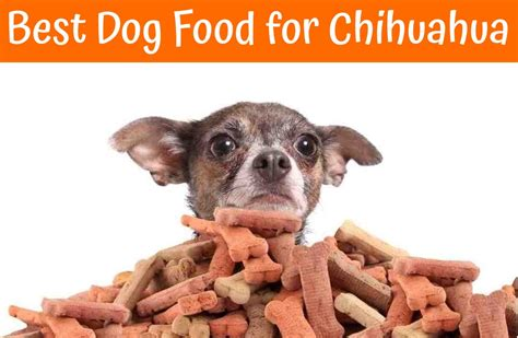 best food for dogs awesome best foods alternativaazapatero org