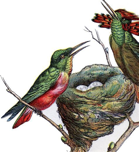 Lovely Vintage Hummingbird Image!   The Graphics Fairy