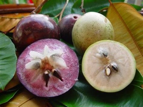 Trai Vu Sua   Vietnamese Tropical Fruits   Pinterest