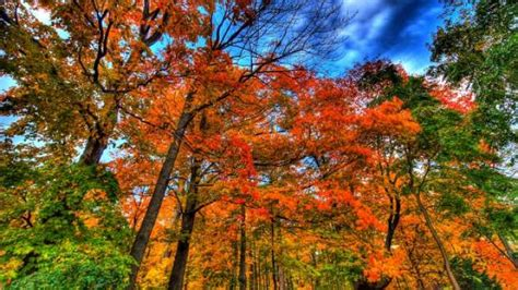 why do leaves change color in autumn why do leaves change color in fall iflscience