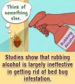 bed bugs and alcohol 17 best ideas about killing bed bugs on pinterest what