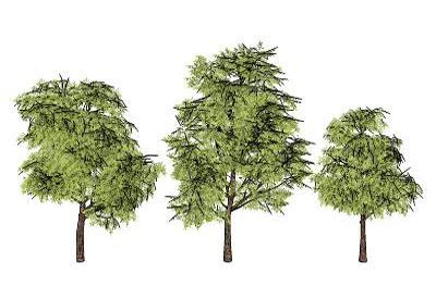 sketchup components 3d warehouse plants smart tree