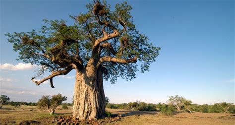 most amazing trees 10 wonderful trees in the world
