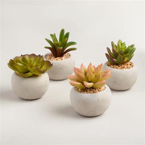 Mini Succulent Cement Pots Set of 4 World Market