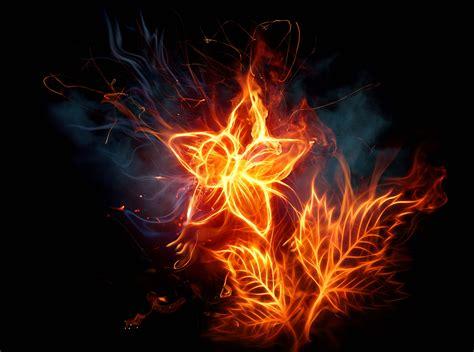 imagenes para fondo de pantalla geniales fondo pantalla flor de fuego