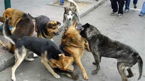 perros con personas ni 209 o muere por el ataque de perros de lafamilia 2015