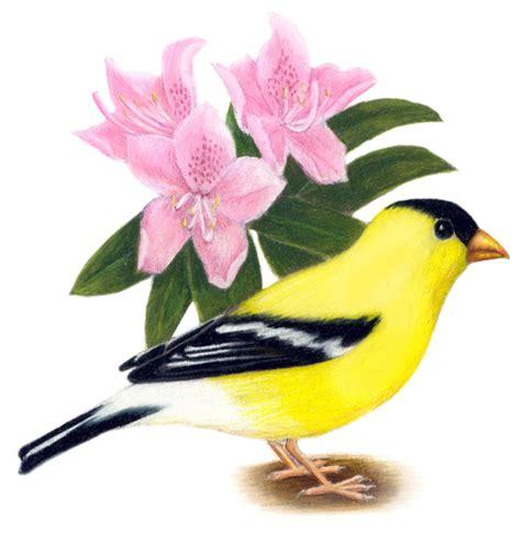 washington state bird facts washingtonbymannyashlynn thinglink