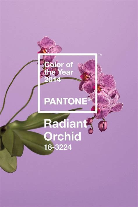 pantone color   year  radiant orchid carrie loves