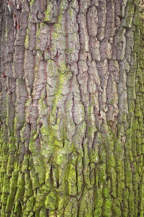 what is a tree trunk covered with 4 letters fragment of tree bark partially covered with green moss