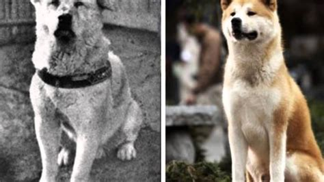 Hatchi,chien fidèle - YouTube Hachiko Movie