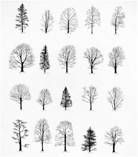 b tree drawing tool tree drawings cliparts co
