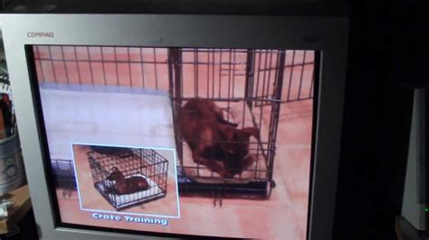 puppy apartment divider puppy potty apartment buy or not