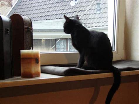 Fensterbrett Verbreitern by Katzen Springen Auf Fensterbrett Seite 5 Katzen Forum