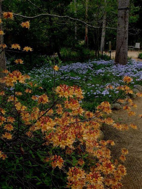 North Carolina Botanical Garden Botanical Garden Nc