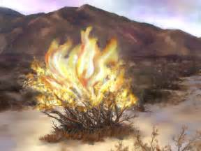 nikos sermon august 28 quot in your wildest dreams your burning bush quot