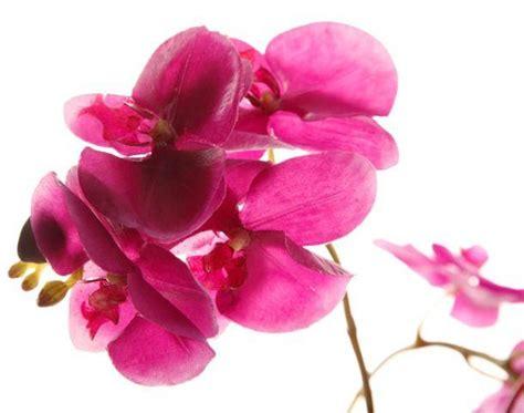 fiori artificiali sia fiori artificiali