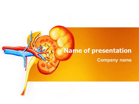 powerpoint templates kidney free kidneys powerpoint template backgrounds 03275