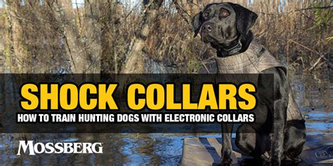 how to a with a shock collar mossberg shock collars how to dogs with electronic collars