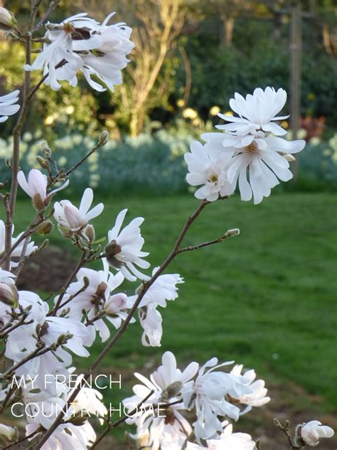 spring start spring in the garden a pleasure to share my french