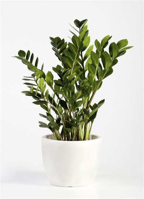 ces plantes d int 233 rieur robustes que vous pouvez offrir 224