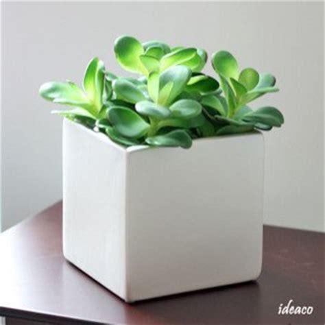 Square Ceramic Plant Pots Simple 5 Inch Pearl White Square Ceramic Pots With 5