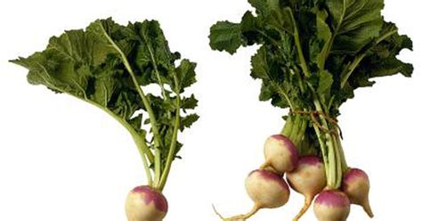how to cook turnip greens with roots livestrong com