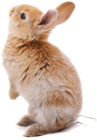eduquer un lapin, oui c'est possible