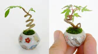 mini house plants ultra small bonsai plants give new meaning to the word