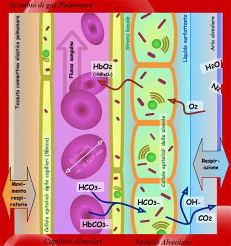 lade di sale benefici propriet 224 dell ossigeno sul benessere ed il dimagrimento