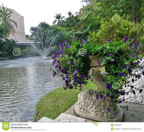 Vase Flowers Garden purple flowers in garden vase stock photo image 63650580