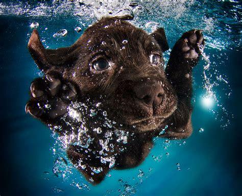 playful underwater puppy photo series  seth casteel
