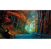 Full HD Wallpaper Road Autumn Forest Foliage Desktop