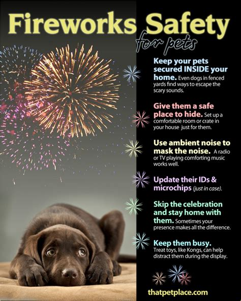 dogs and fireworks fireworks safety tips for pets visual ly