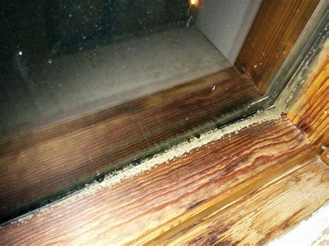 Mold On Window Sill Greenish Gray Mold On Wooden Window Frame Home