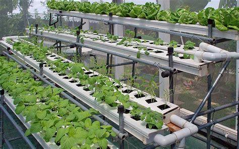 Jual Manifold Hidroponik hidroponik solusi menanam tanpa menghabiskan lahan ilmu