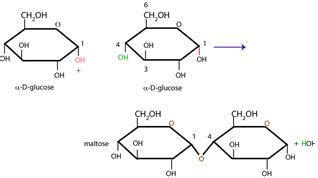dehydration synthesis definition dehydration synthesis definition reaction and exle