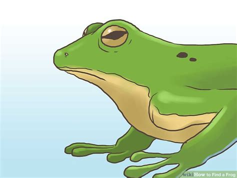 how to catch a frog in your backyard how to catch a frog in your backyard how to catch a frog