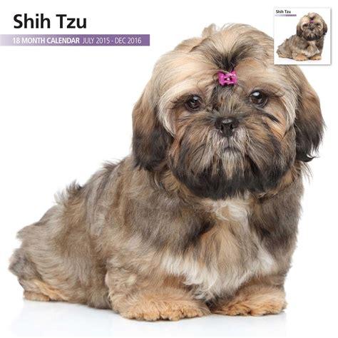 shih tzu in season shih tzu 2016 18 month calendar 163 9 74 garden4less uk shop