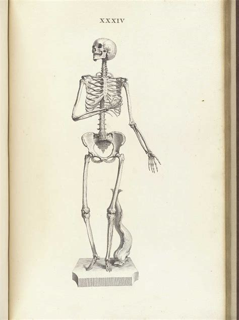 historical anatomies on the web william cheselden home